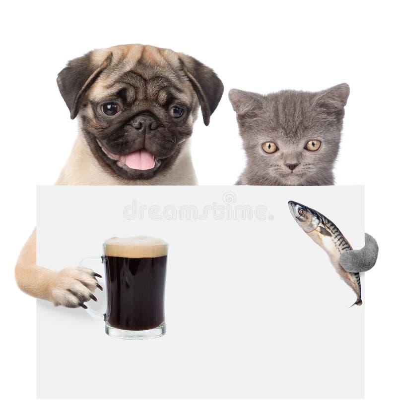 Chat et chien jugeant les poissons et la bière jetant un coup d'oeil par derrière le conseil vide D'isolement sur le fond blanc photographie stock libre de droits
