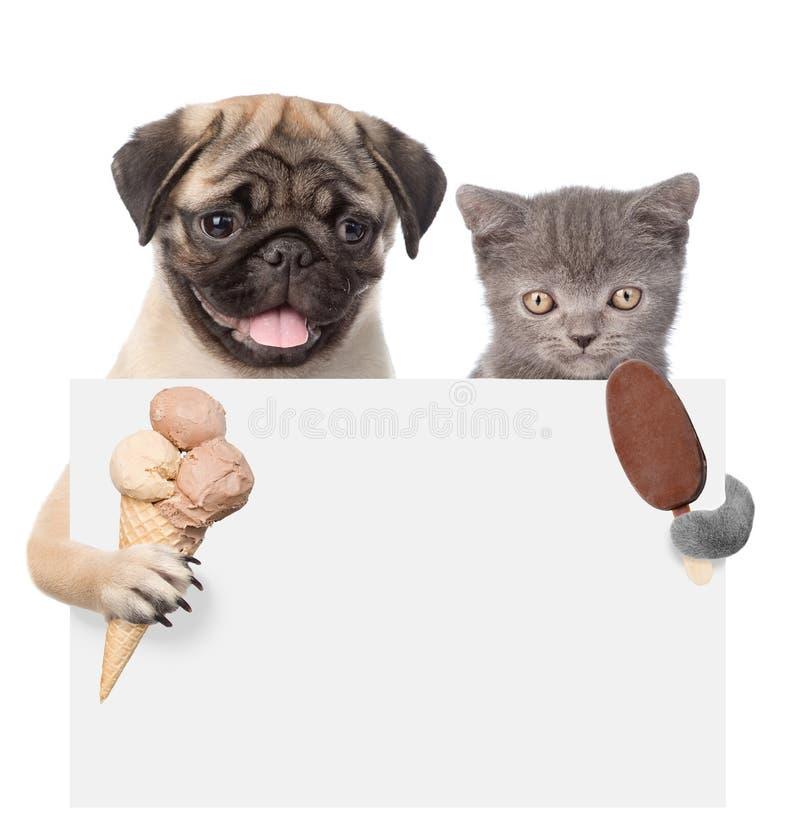 Chat et chien tenant la crème glacée et jetant un coup d'oeil par derrière le conseil vide D'isolement sur le fond blanc photos stock