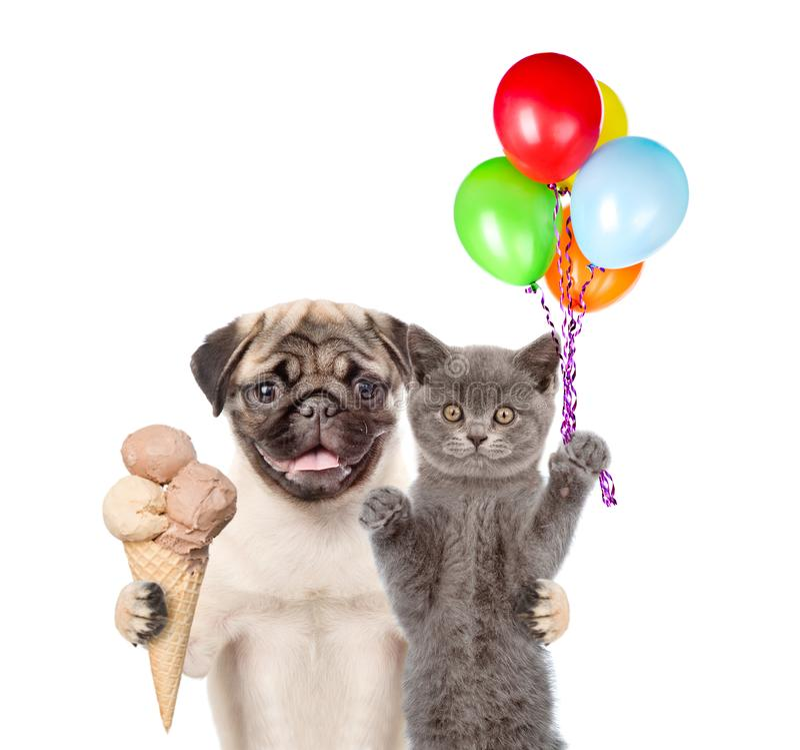 Chat et chien tenant les ballons et la crème glacée  D'isolement sur le fond blanc images stock