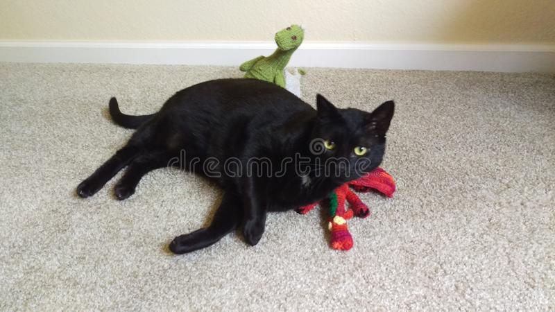 Chat et dragons images stock