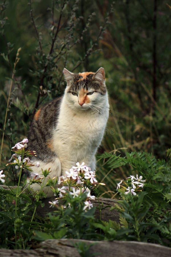 Chat et fleurs sauvages photo stock