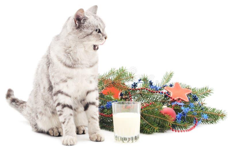 Chat et lait près d'arbre de Noël images libres de droits