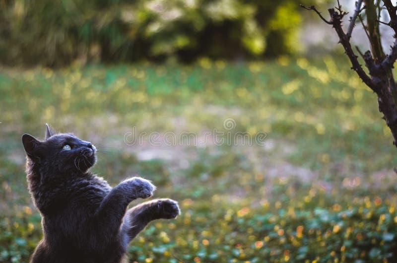 Chat et lion image stock