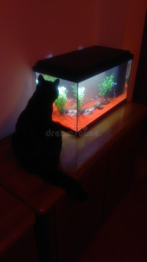 Chat et nouvel acquarium images stock