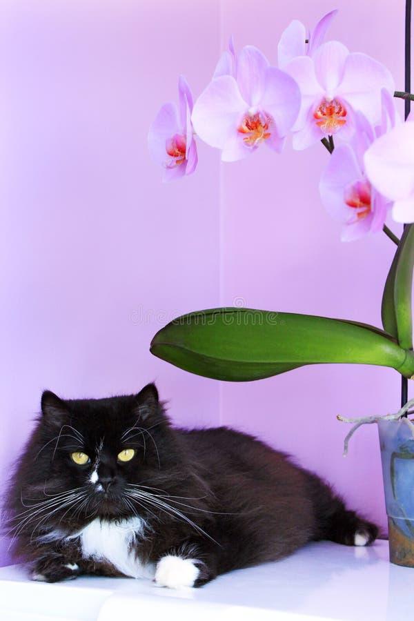 Chat et orchidées roses sur le fond Intérieur de Vivivd photos libres de droits
