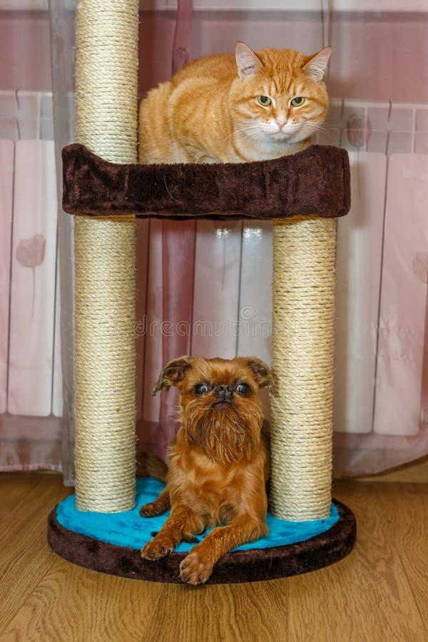 Chat et petit chien assis sur un poteau à gratter photos libres de droits