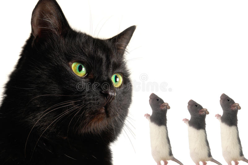 Chat et rat images stock