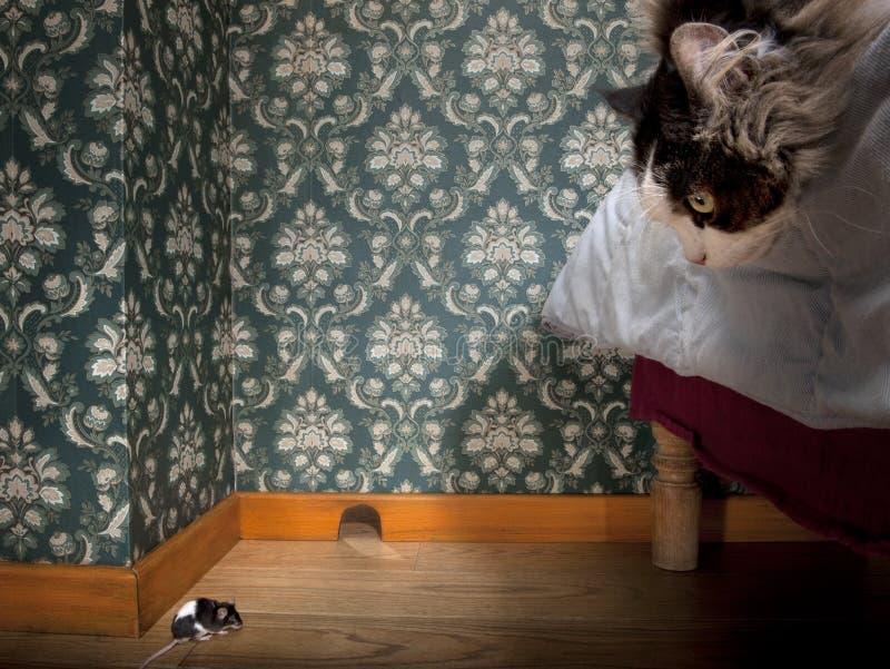 Chat et souris dans une salle démodée de luxe images stock