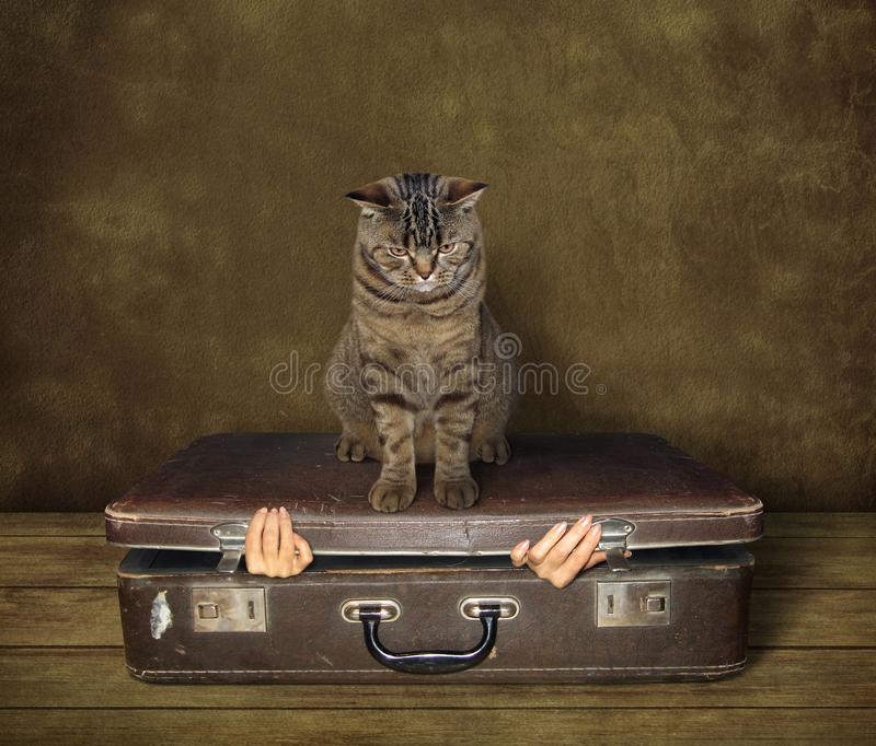 Chat et valise 1 photographie stock
