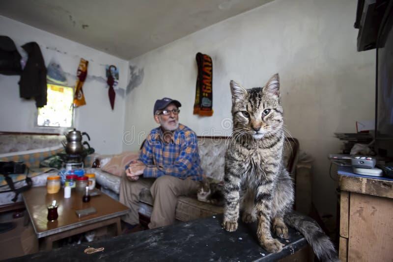Chat et vieil homme d'intérieur Photo de concept d'art photographie stock libre de droits