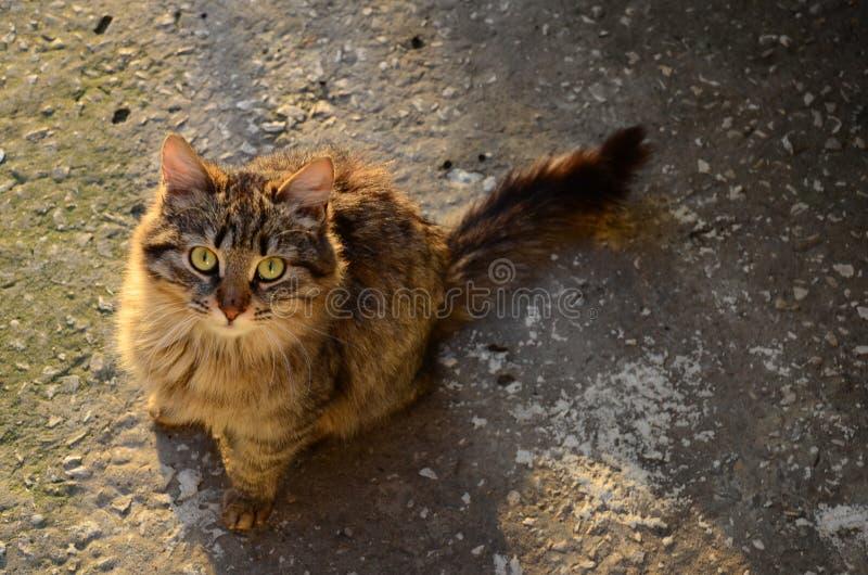 Chat extérieur pelucheux photo stock