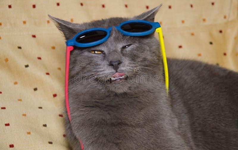 Chat fou avec des lunettes de soleil dans la tête photo stock