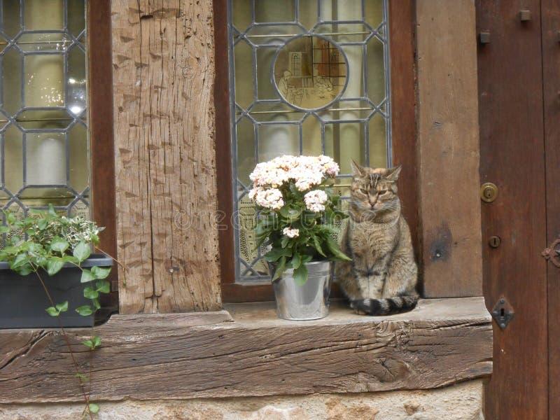 Chat gentil en Dinan Bretagne, France photographie stock