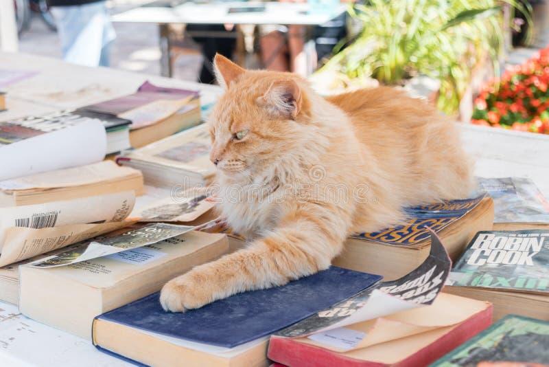 Chat gentil sur les livres Chat aux livres libres pour des vacances image stock