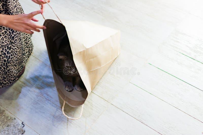 Chat grincheux jouant le cache-cache dans un sac de papier image stock