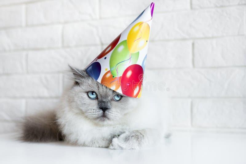 Chat grincheux posant dans un chapeau d'anniversaire image stock
