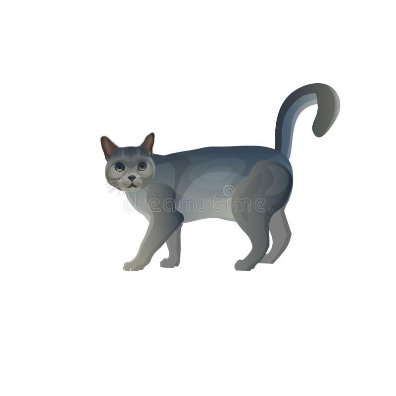 Chat gris avec la queue  illustration stock