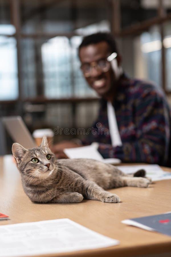 Chat gris ayant un repos sur la table image libre de droits