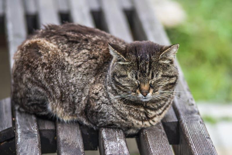 Chat gris dormant sur le banc en bois dans le jour d'?t? images stock