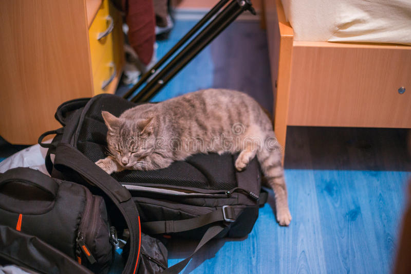 Chat gris dormant sur un sac d'appareil-photo photos libres de droits