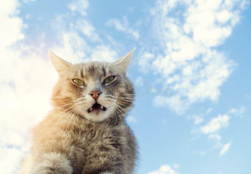 Chat gris drôle sur un fond de ciel bleu Portrait d'animal familier Chaton ray? Animal Place pour le texte photos stock