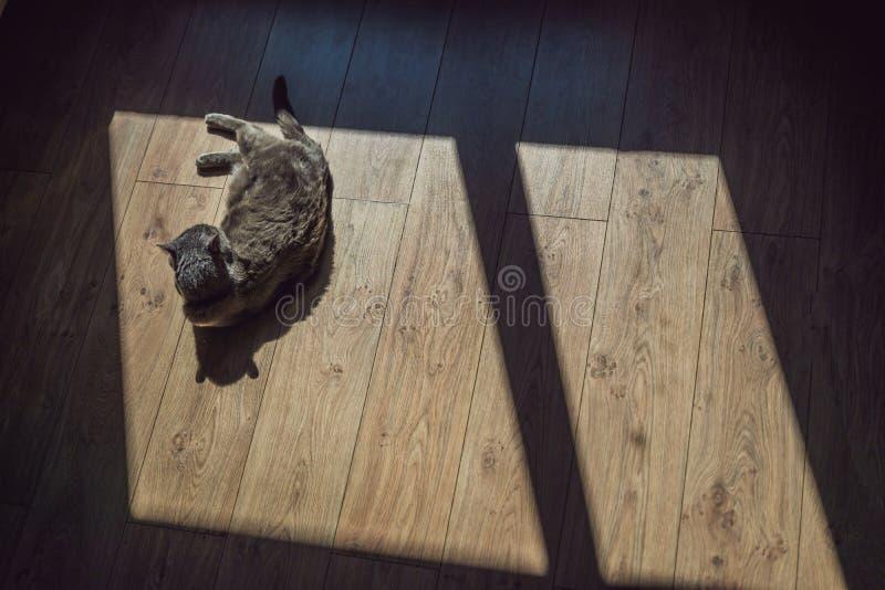 Chat gris exposant au soleil devant la fenêtre images stock