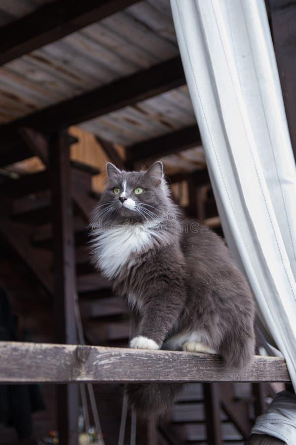 Chat gris mignon se reposant sur la véranda en bois de la maison extérieure photo stock