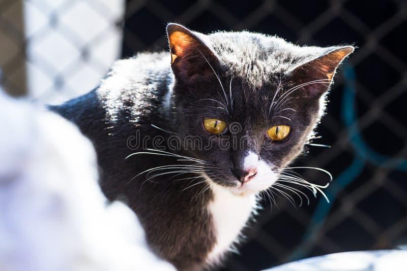 Chat gris reposant au soleil léger qui comme fond photo libre de droits