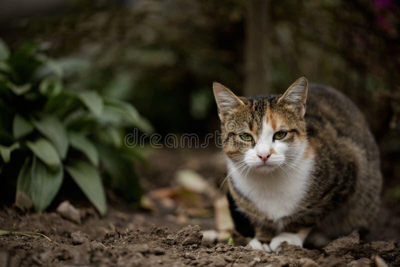 Chat gris sans abri drôle image stock
