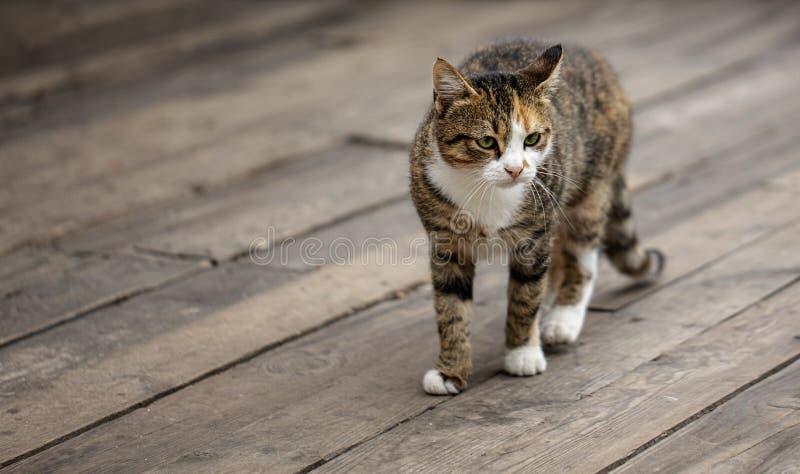 Chat gris sans abri drôle image libre de droits