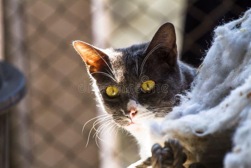 Chat gris se reposant au soleil comme fond images libres de droits