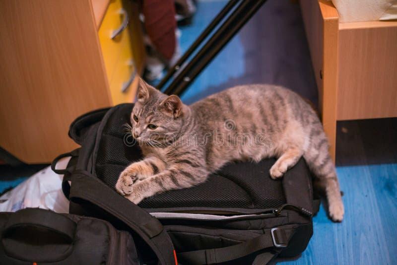 Chat gris se reposant sur un sac d'appareil-photo images libres de droits