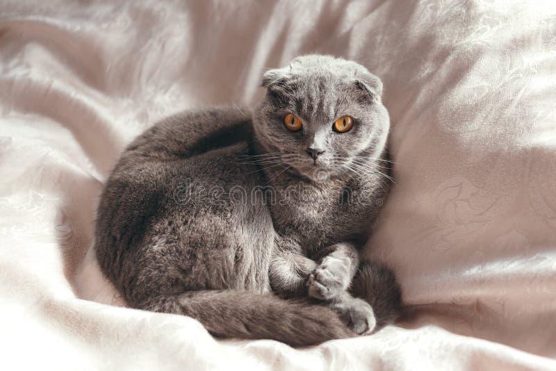 Chat gris se trouvant sur le lit image stock