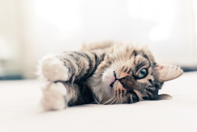 Chat gris se trouvant sur le lit images libres de droits