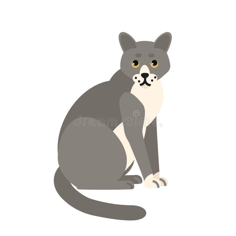 Chat gris songeur mignon d'isolement sur le fond blanc Animal domestique ou animal familier drôle Minou ou minou se reposant ador illustration de vecteur
