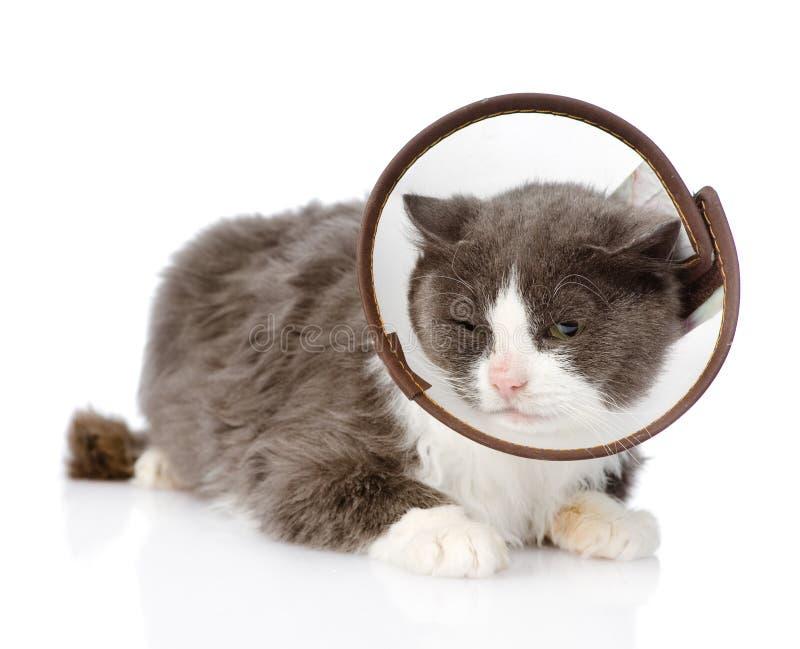 Chat gris utilisant un collier d'entonnoir D'isolement sur le fond blanc photos libres de droits
