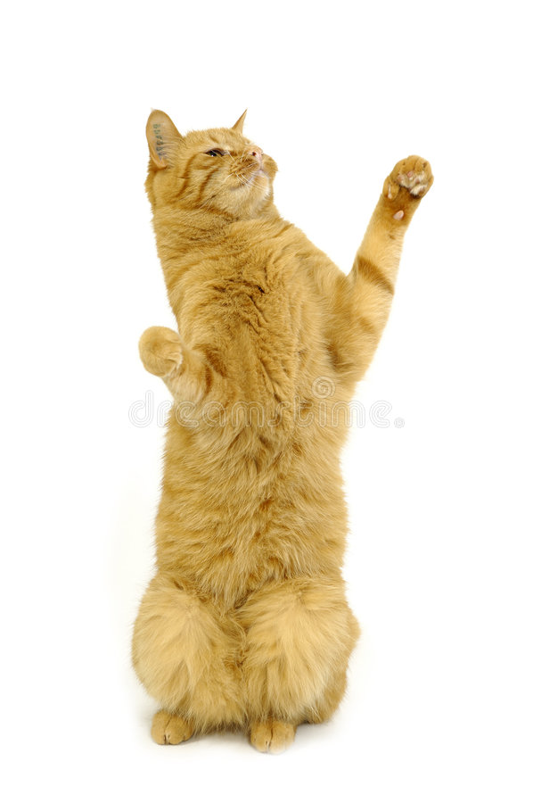 Chat heureux images stock