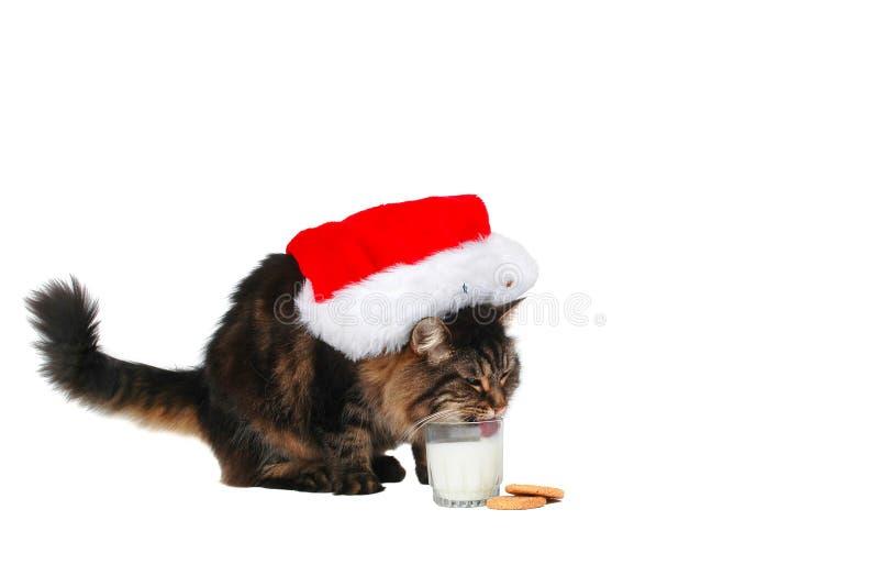 Chat heureux de Santa photographie stock