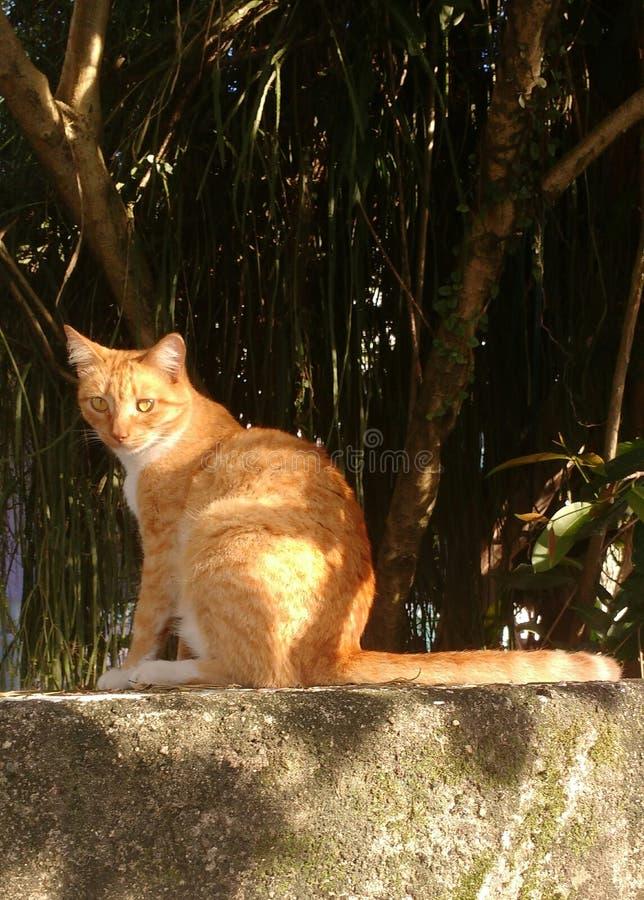 Chat jaune avec des effets solaires image libre de droits