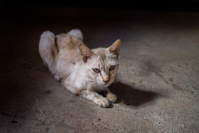 Chat jaune mince image libre de droits