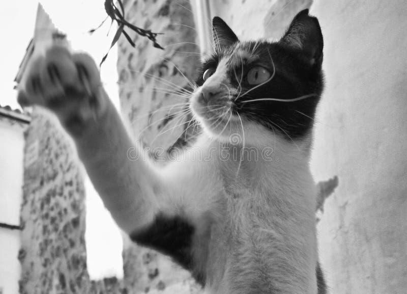 Chat jouant avec une herbe photos stock