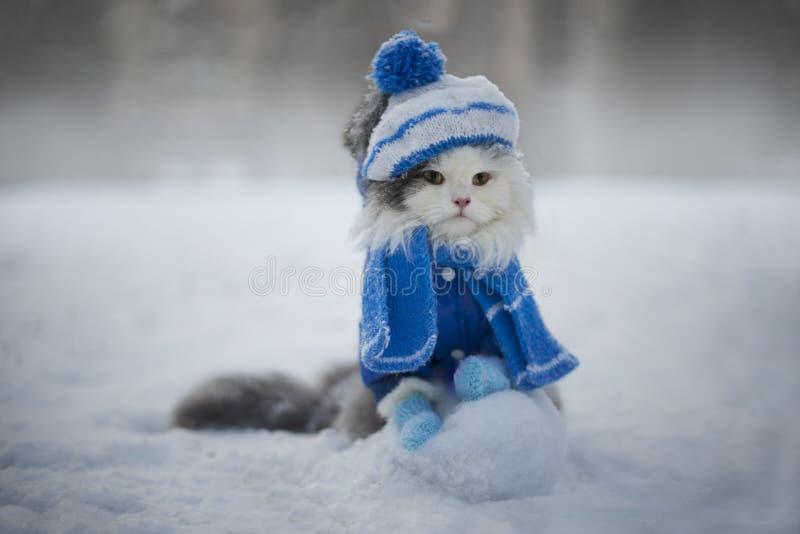 Chat Jouant Pendant Le Jour Givré De Neige Image stock - Image du neige,  chaton: 64544209