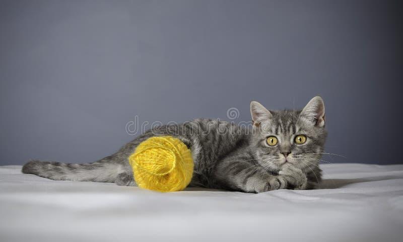 Chat malade sur une table avec des médecines photographie stock