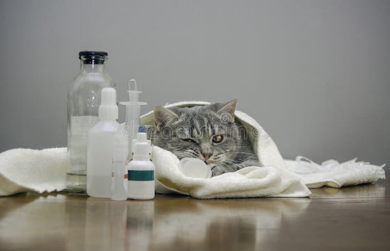 Chat malade sur une table avec des médecines photos stock