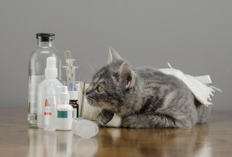 Chat malade sur une table avec des médecines photos libres de droits