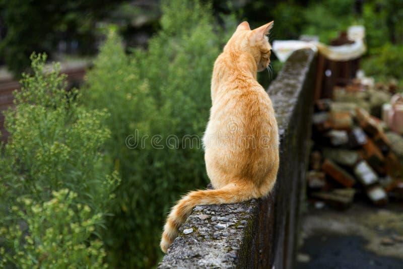 Chat mignon photographie stock
