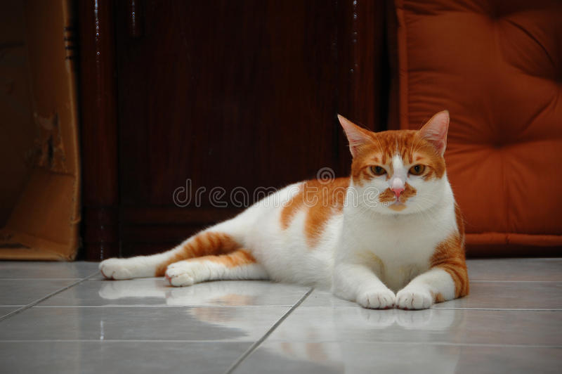 Chat mignon photos stock
