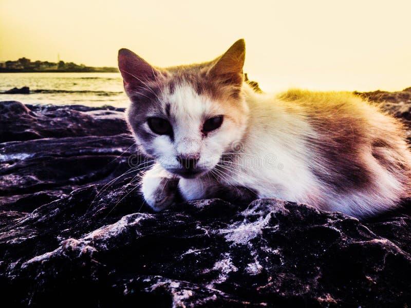 Chat mignon avec le beau coucher du soleil photos stock