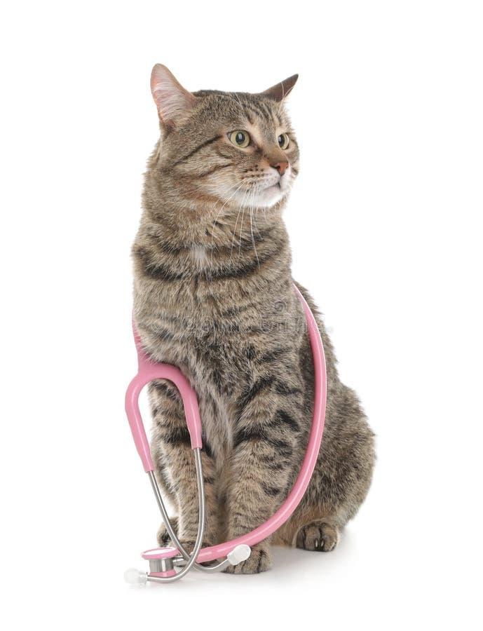 Chat mignon avec le stéthoscope comme Doc. de vétérinaire photos stock