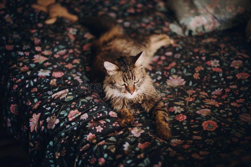 Chat mignon avec les yeux verts étonnants se trouvant sur le lit floral dormant, c photographie stock